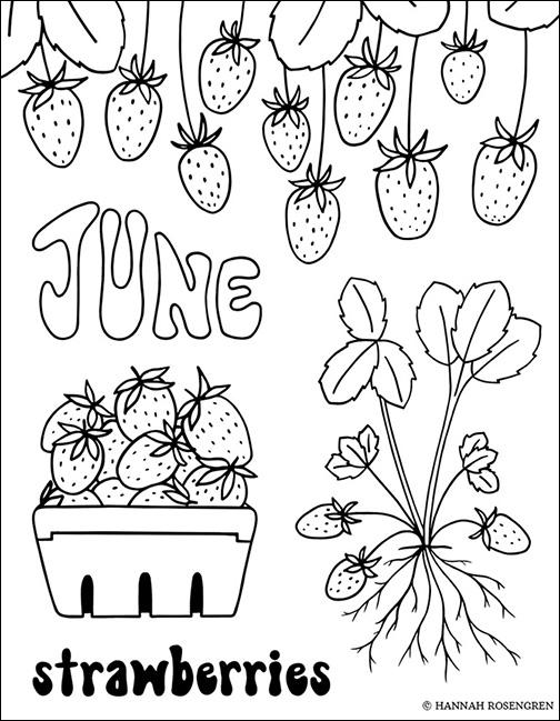 farm coloring book_shopify_web res 2_NEW SITE BORDER.jpg