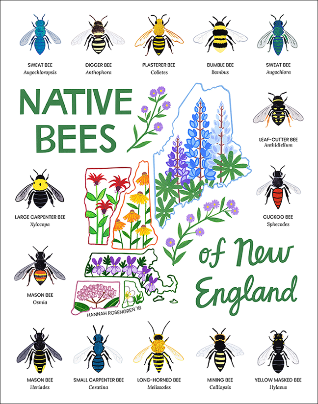 Native Bees of New England WEB 72 RES_png_SQUARESPACE SMALLER.png