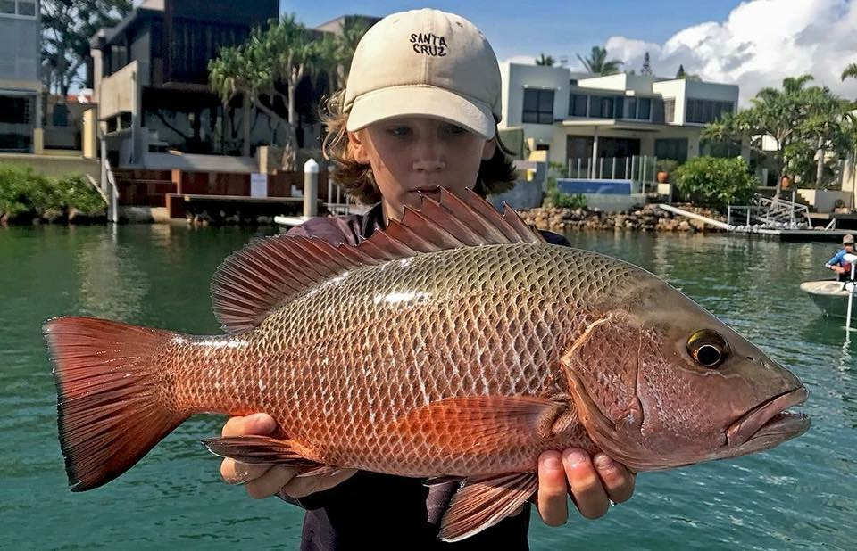 Nathan Meadows with an amazing shot of a Noosa River Mangrove Jack. The fish was released safely.