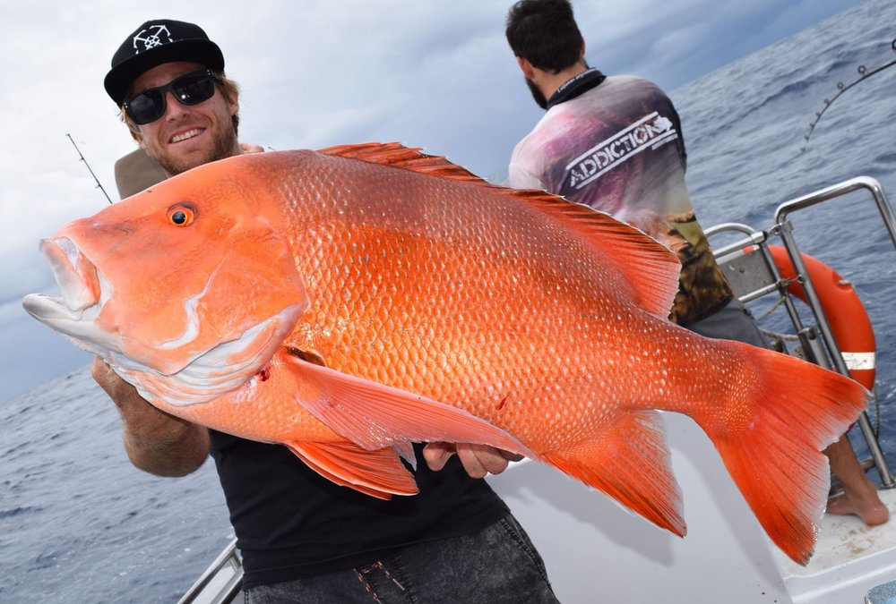 The SCF Noosa Champion Angler of the year Brae Srfhtnfshman with a trophy sized Red Emperor From Double Island Point.