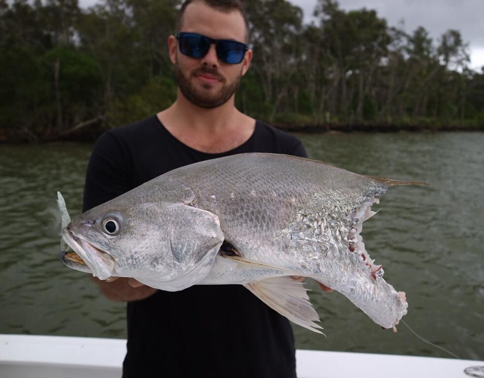 Antonio Guidi with what could've been the biggest Mulloway from the estuaries all year.