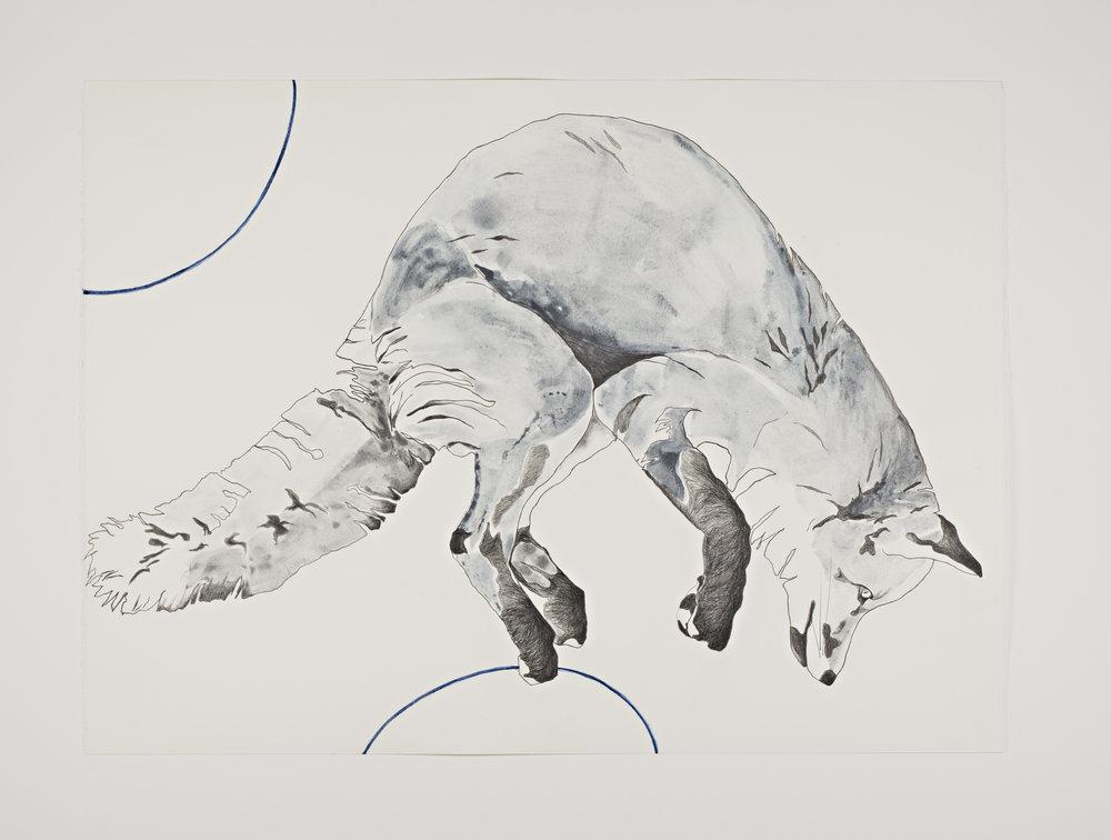 Indigo Fox