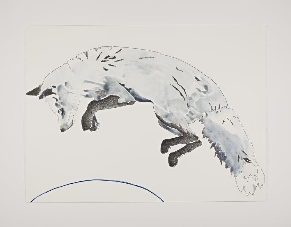Indigo Fox 2