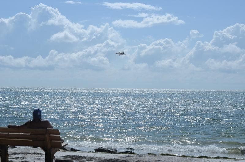 Shell Beach North Siesta Key Sarasota Florida
