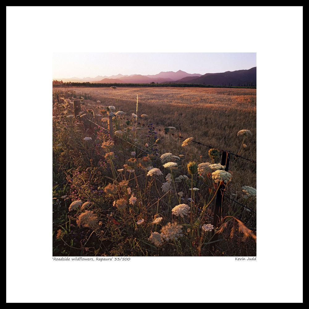 006 Roadside wildflowers, Rapaura