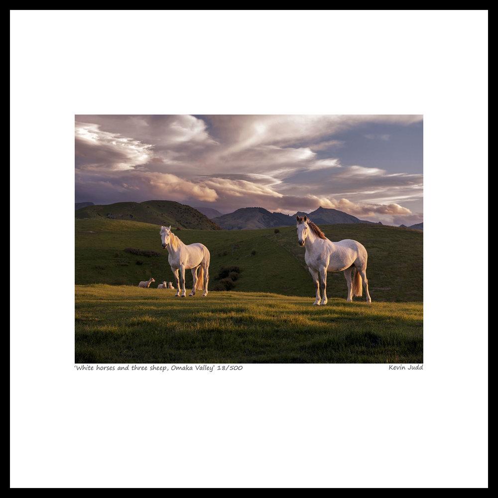 014 White horses and three sheep, Omaka Valley