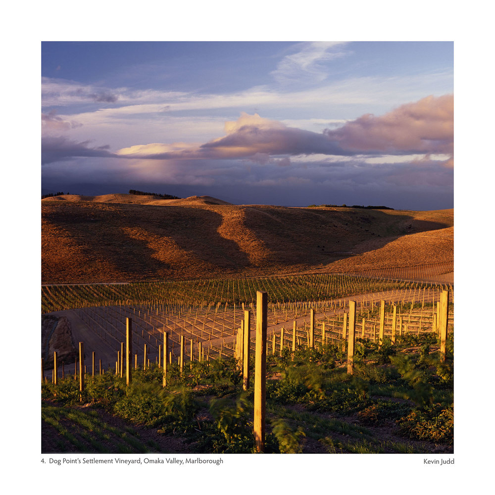Settlement Vineyard - Dog Point sm.jpg