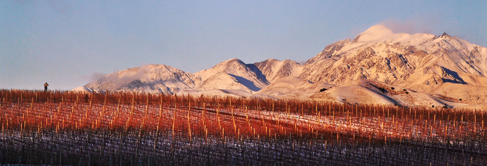 Ballochdale Vineyard, Upper Awatere Valley, Marlborough - image Garry Neill