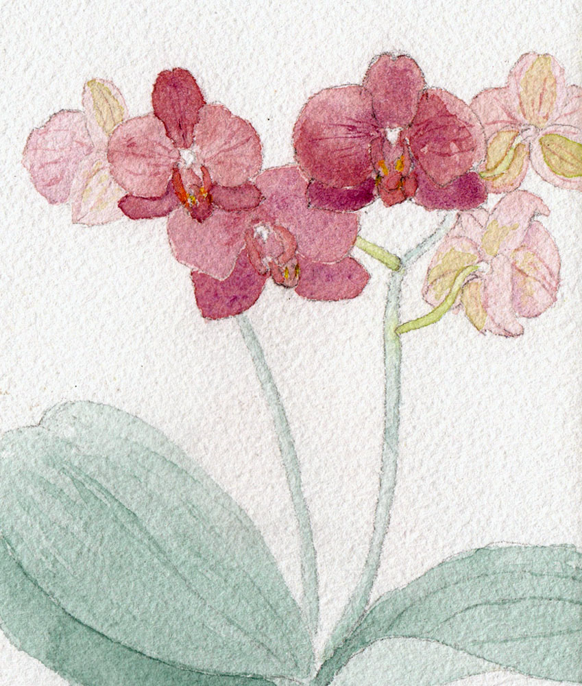 orchids for web.jpg