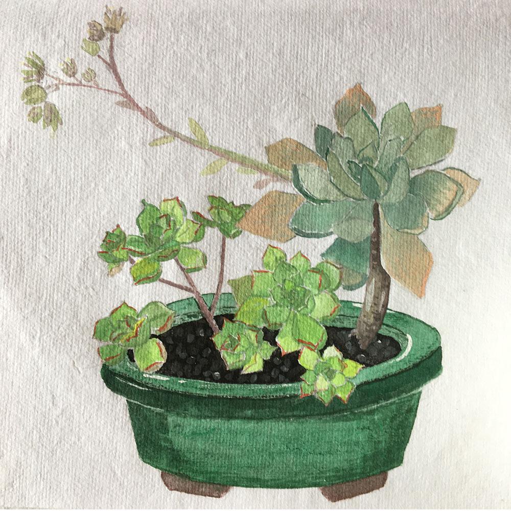 succulent for web.jpg
