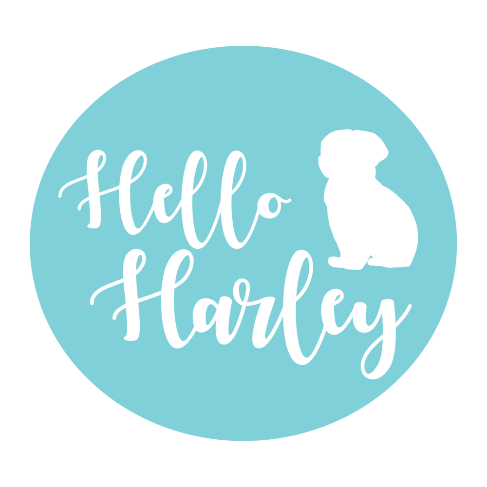 HELLO HARLEY   A project to create a logo for all of Hello Harley social media platforms as well as several assets for the their video editting team.