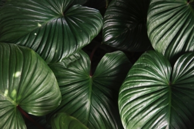 botanic-botanical-bright-827058.jpg