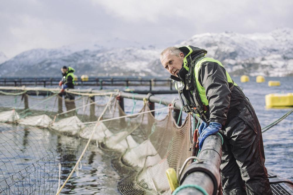 Nordlaks aquaculture farm at Hallvardøy, Lofoten.