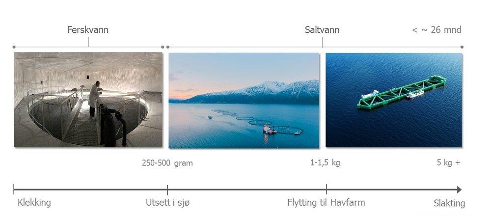 Skjematisk oversikt av Nordlaks-metoden. Illustrasjon: Nordlaks