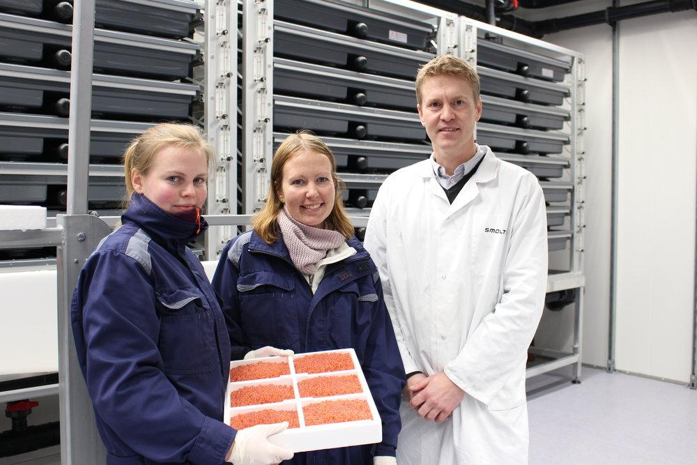 FV: Trine Grimstad, Linda Lund og Eirik Welde i klekkeriet på settefiskanlegget på Innhavet, Hamarøy.