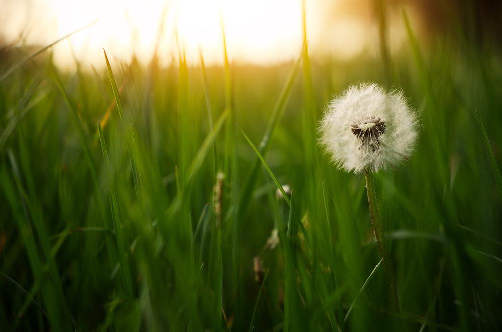 sunlight-flower.jpg