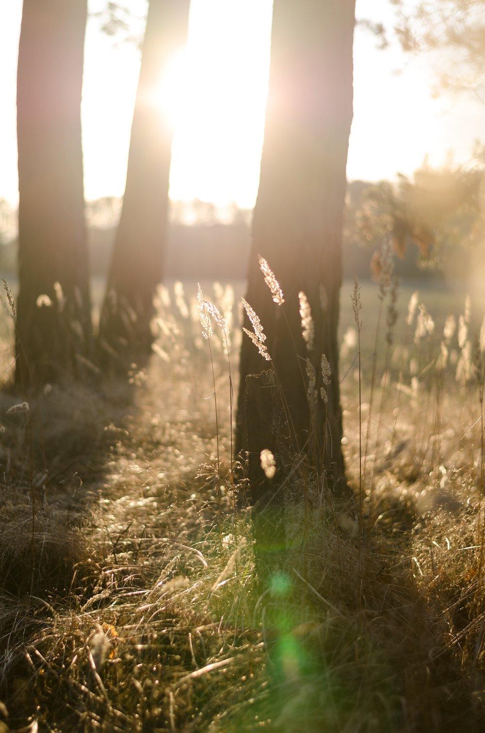 light-trees-.jpg