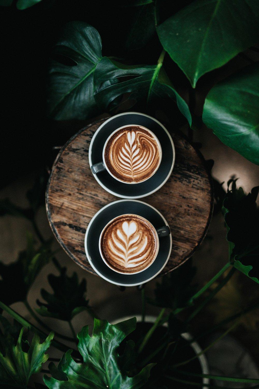 coffee-plant.jpg