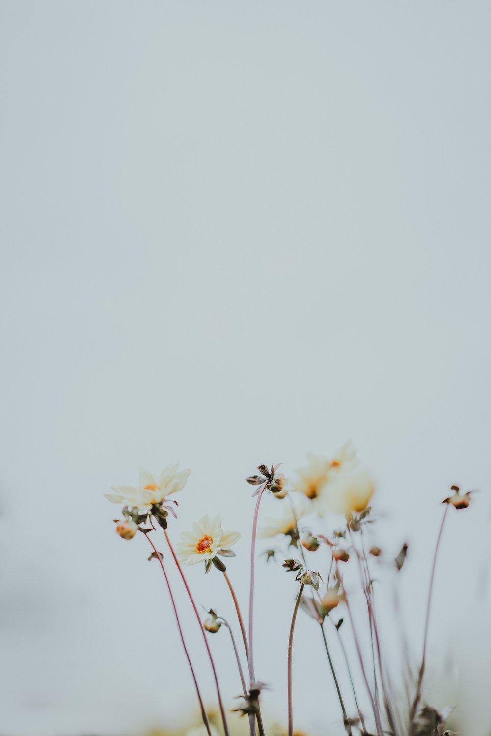 flowers-simplicity-uncluttered-unsplash.jpg