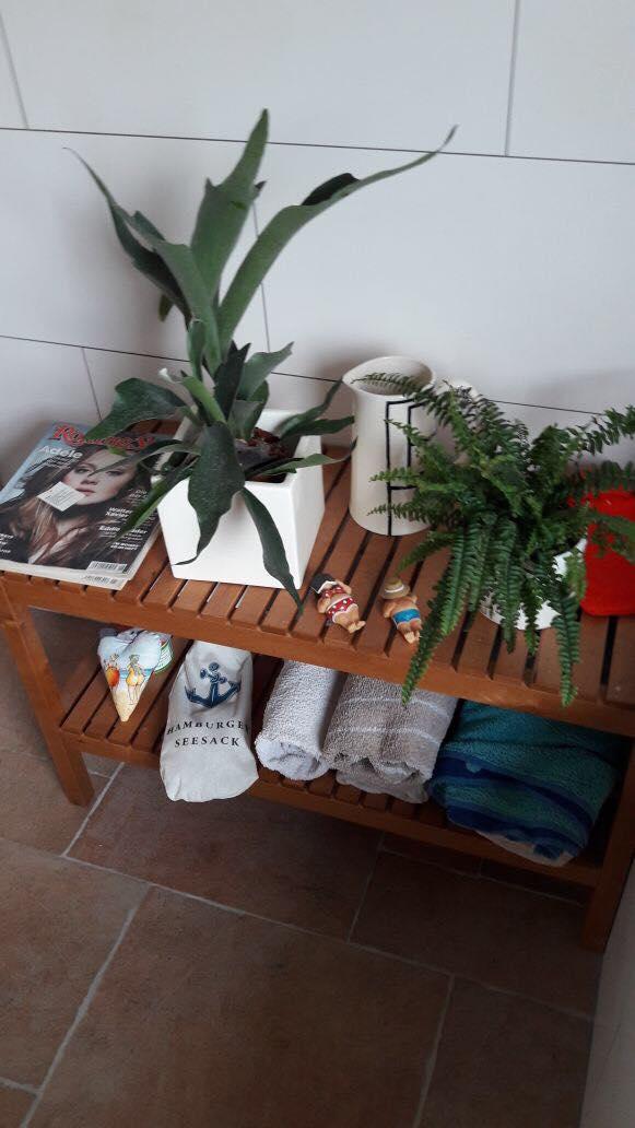 Links:  Hirschzunge - eine tolle großblättrige Pflanze, die direkte Sonne nicht mag. Dafür aber gerne regelmäßig Wasser. Das Badezimmer scheint ideal. Die Blätter bilden als Schutz vor dem Austrocknen einen leichten Pelz auf der Oberfläche. Sieht Klasse aus!      Rechts:  Der Klassiker schlechthin: Schwertfarn. Mochte man auch schon vor 200 Jahre sehr gerne als Zimmerpflanze. Lässt sich sehr gut vermehren.