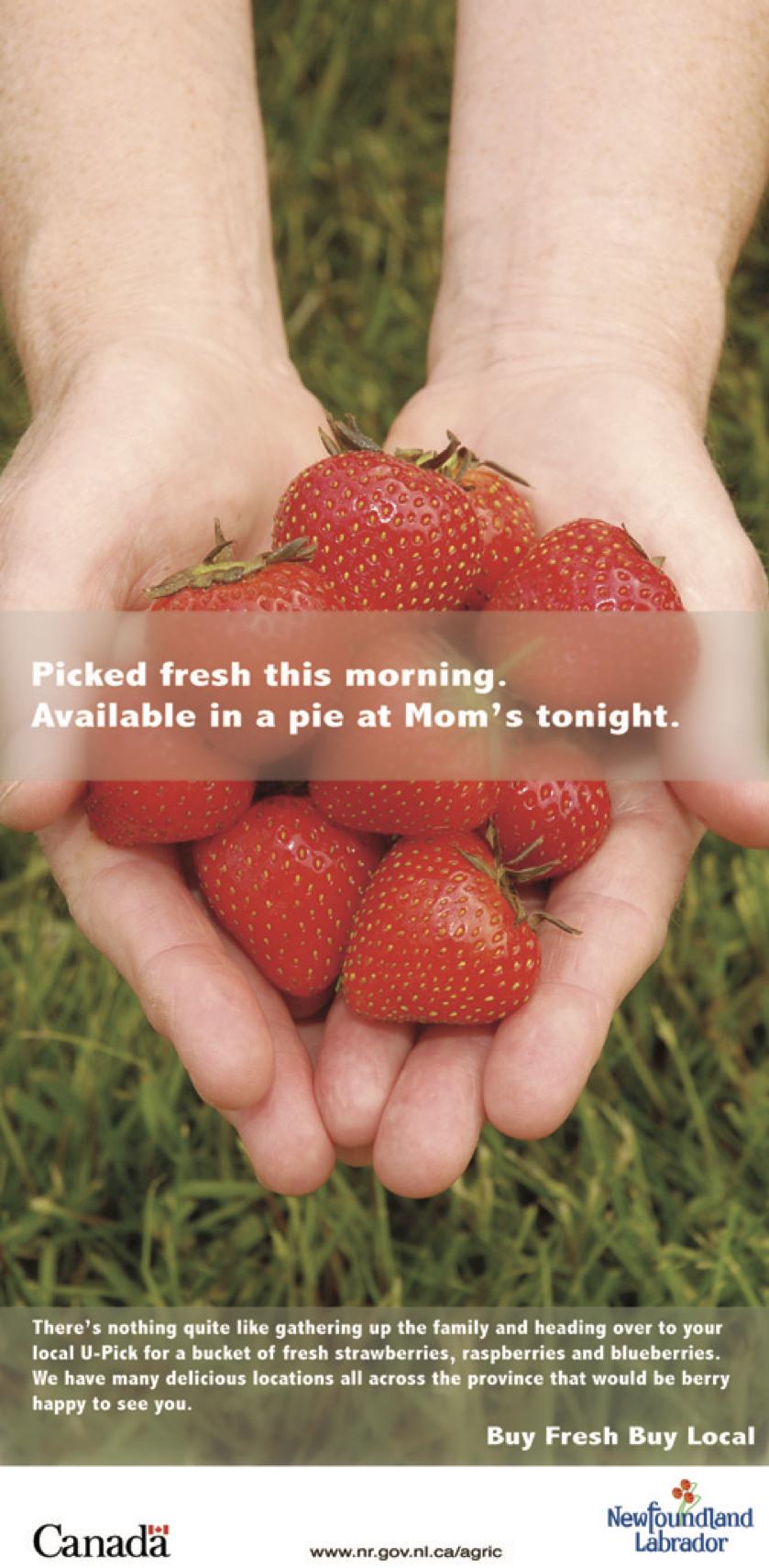 poster- berry.jpg