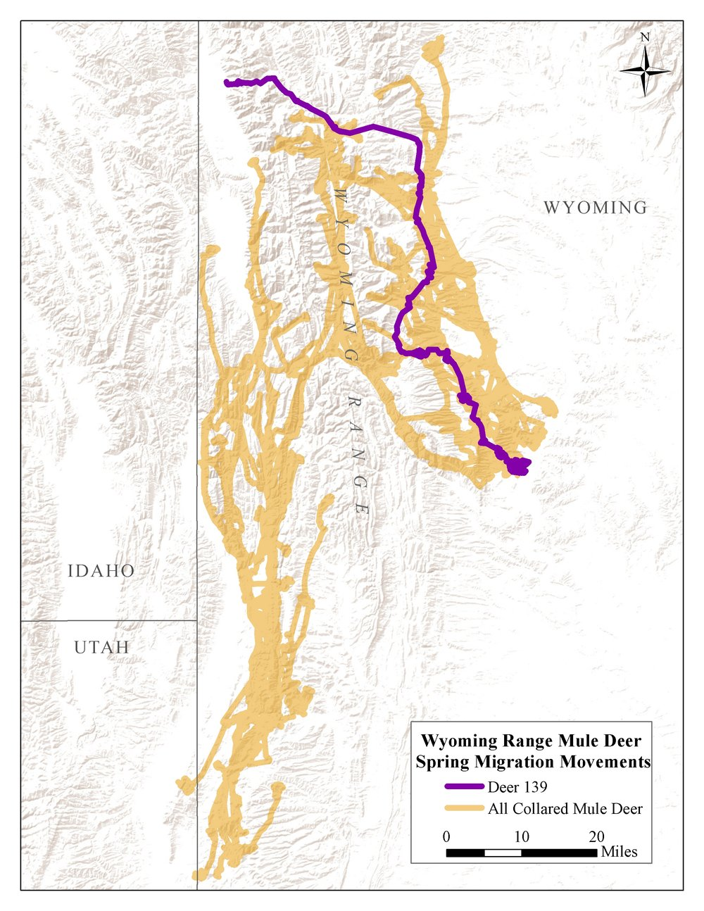 In spring 2016, dozens of collared mule deer (orange lines) migrated into the high mountains of western Wyoming. Deer 139 (purple line) traveled 85 miles through the Wyoming and Salt River Ranges.