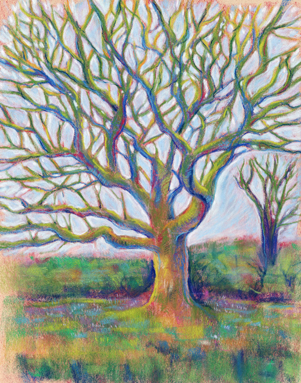 The Wandering Oak - Pastel painting by Jennifer Hawkyard