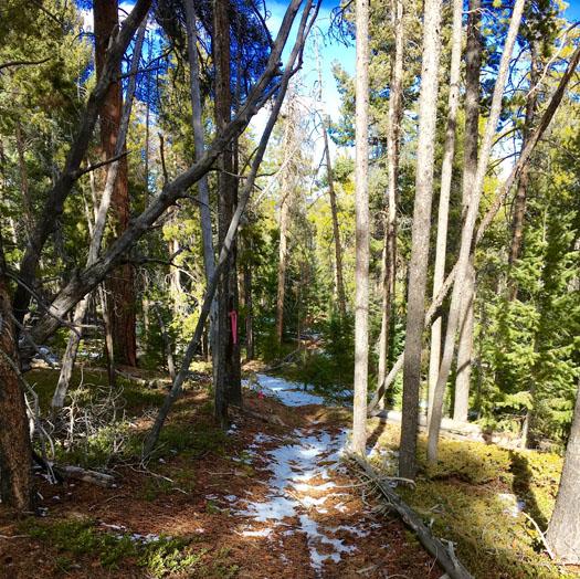 Trail2-sm.jpg