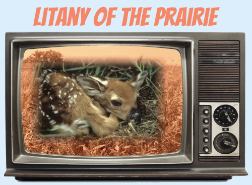 Website-tv-litanyofprairie.jpg