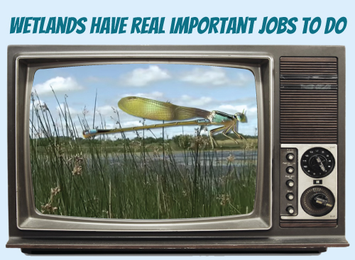 Website-tv-wetlandsimportantjobs.jpg