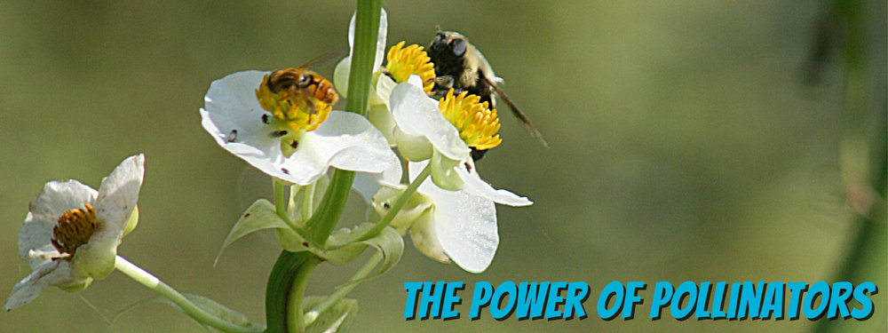 PowerOfPollinators-Text-01.jpg