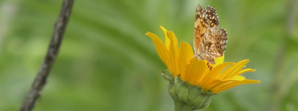 LATI-Pollinators-NoText-01.jpg