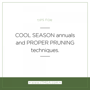 cool-season-annuals-blog-pic-300x300.png