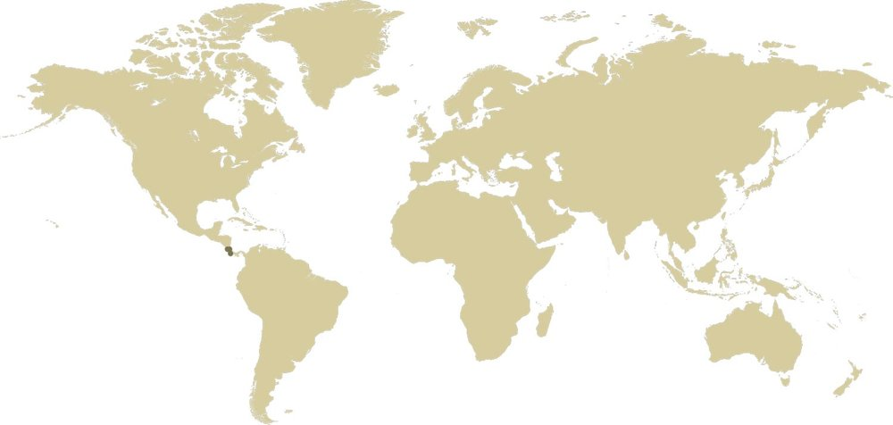World-Map_rainforest-diaries.jpg