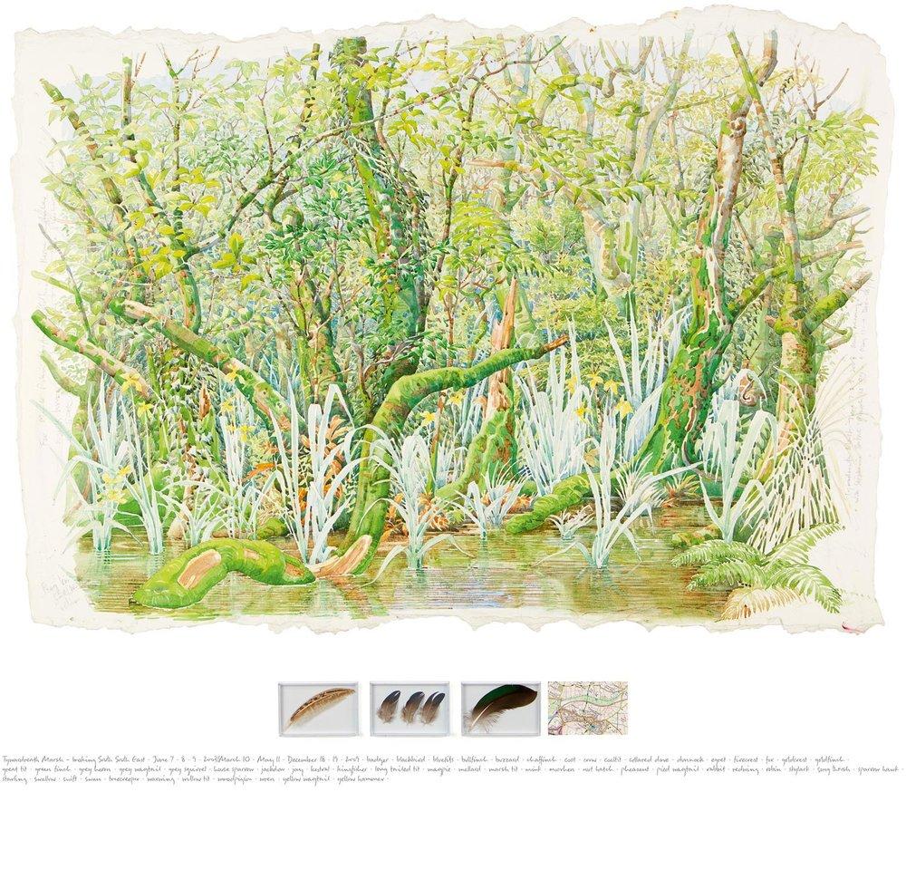 Tony Foster ,  Tywardreath Marsh—Observations , 2009