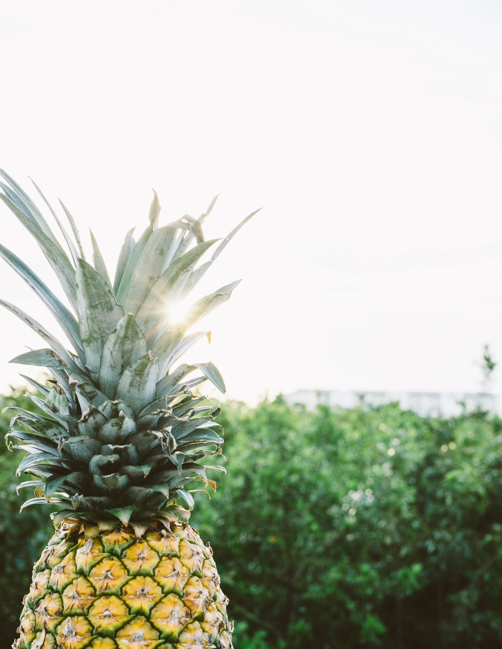 pineapple-supply-co-138081-unsplash.jpg