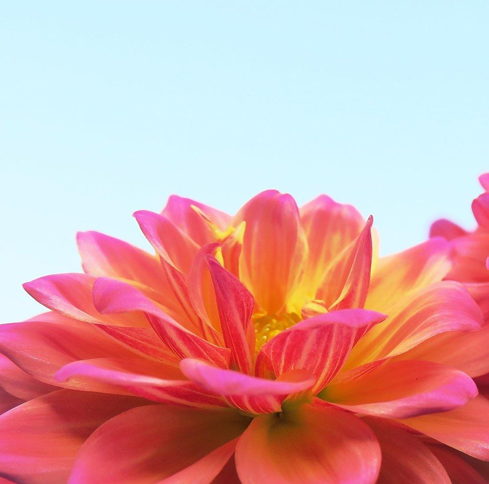 flower-3297730_1920.jpg