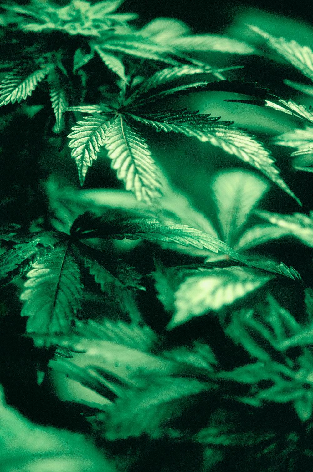 Plants-78630028.jpg