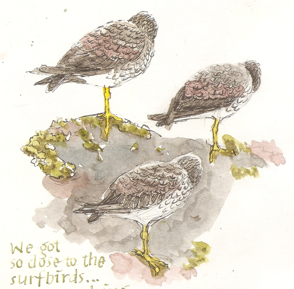 surfbird copy 3.png
