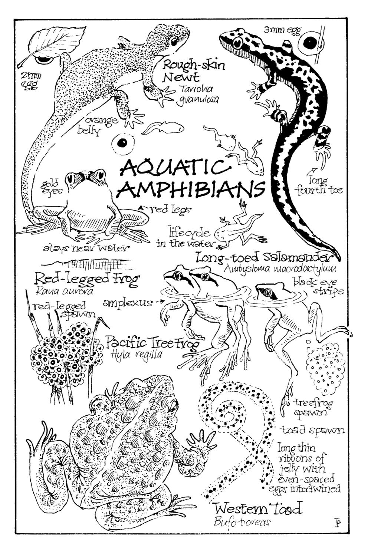 amphibians copy.png