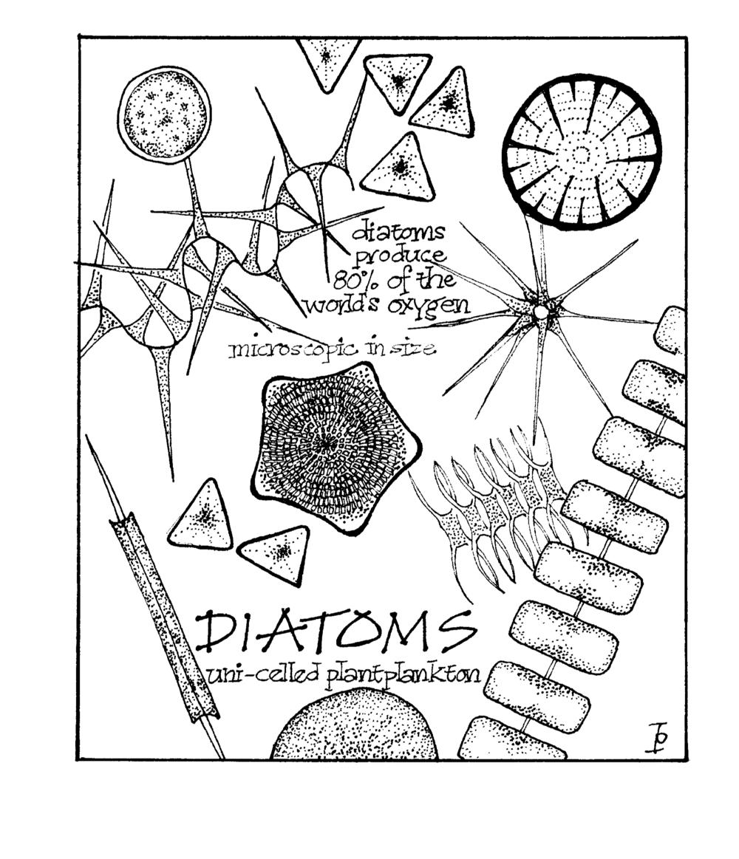 diatoms copy.png