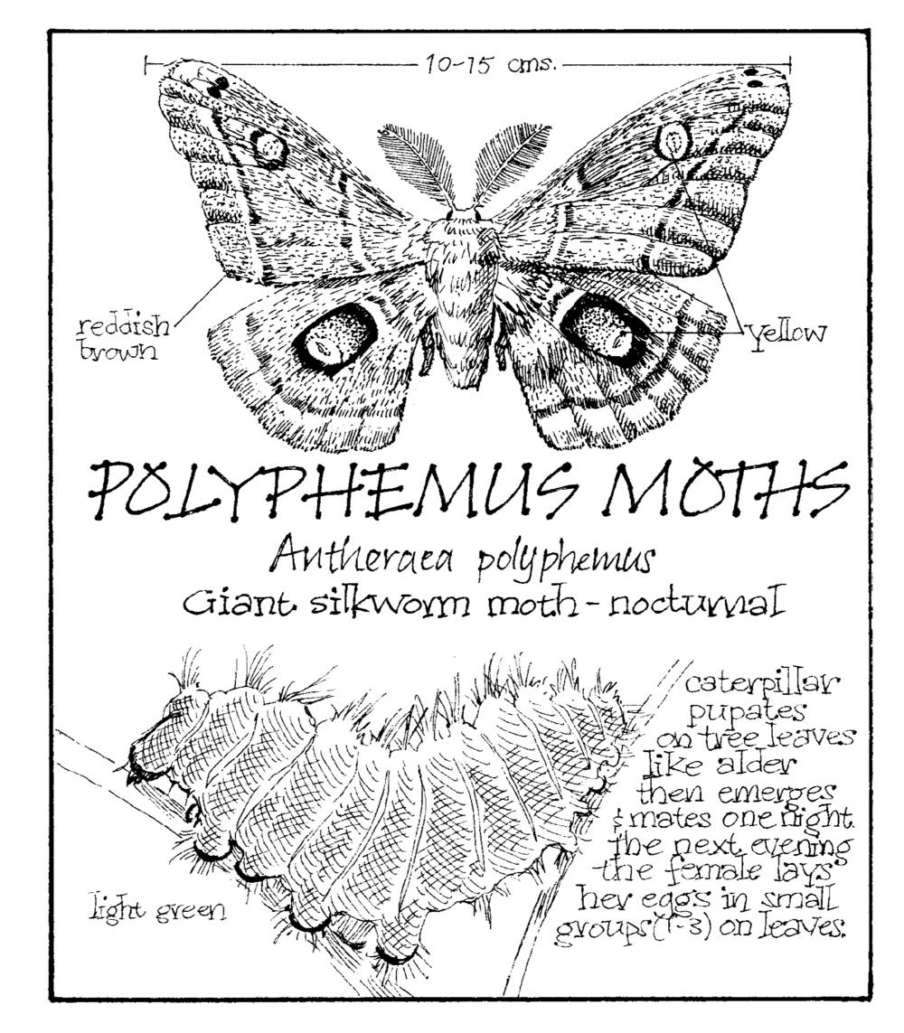 moth copy.png