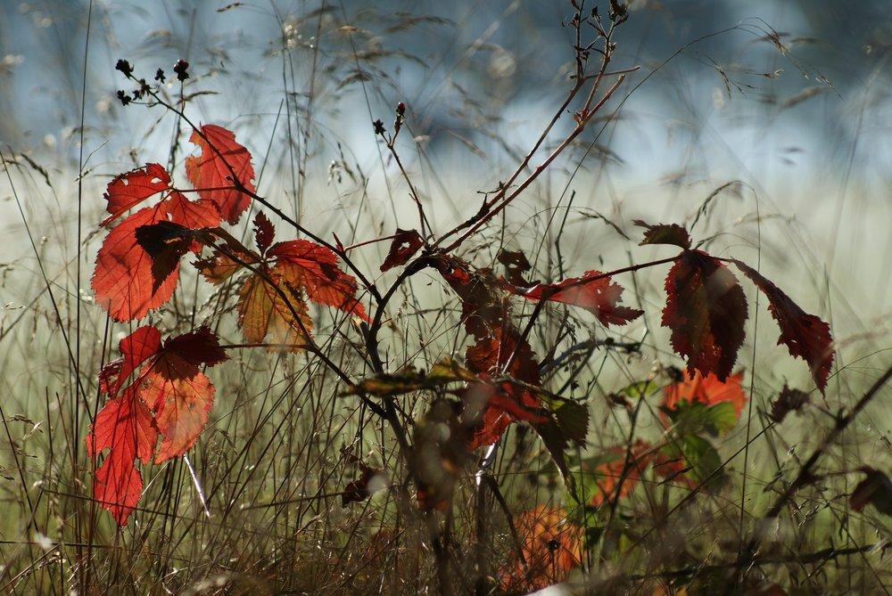 Herbst-205588.jpg