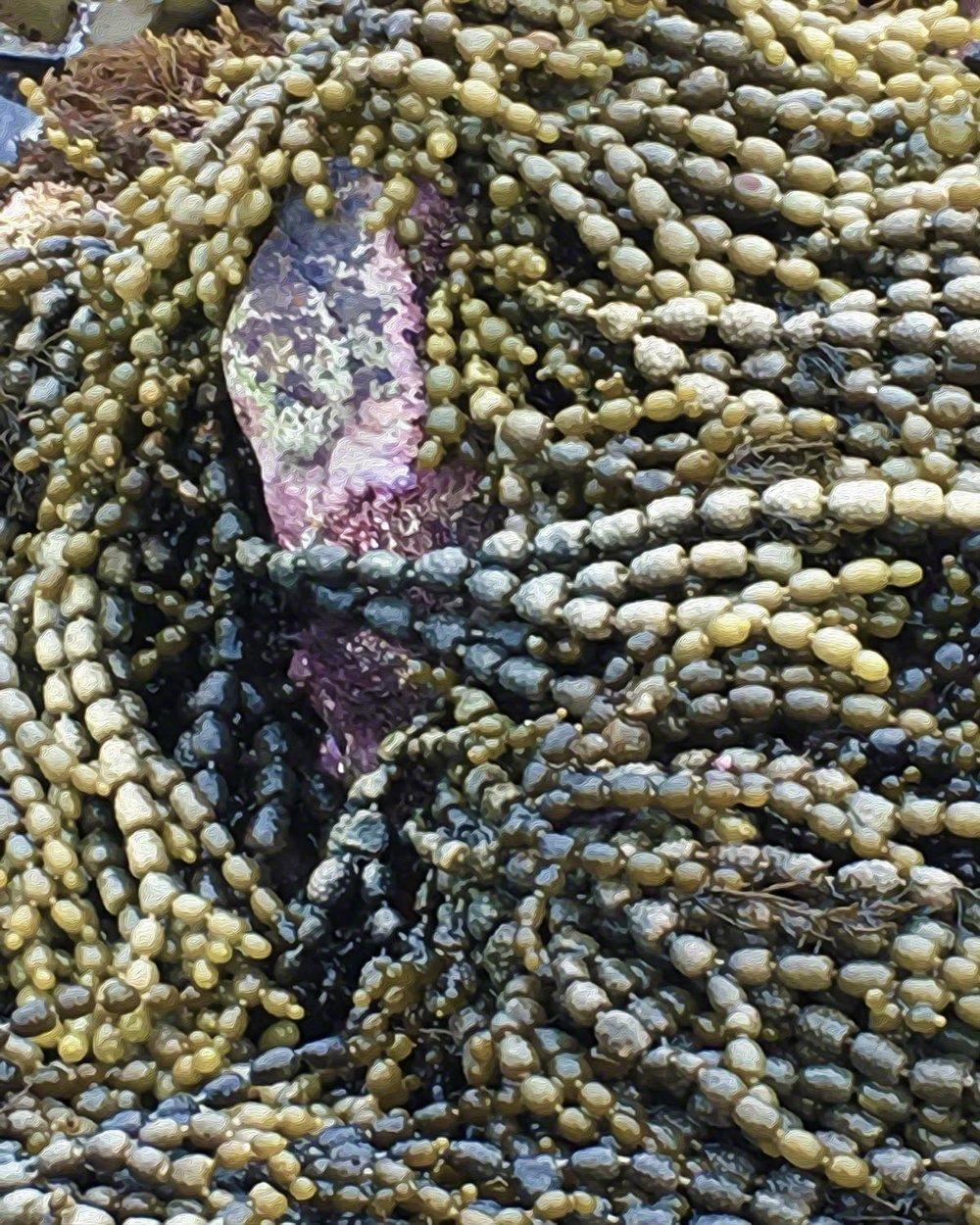 Ocean Beads - 16