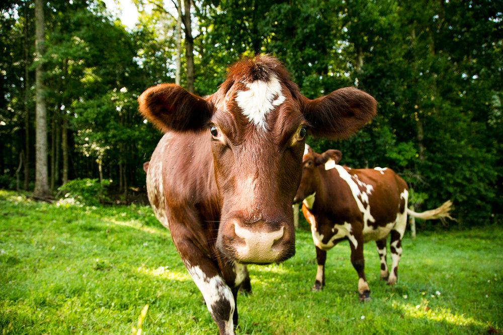 Yokeley Farms 2016-136.jpg