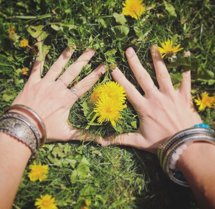 hands on earth with dandelions