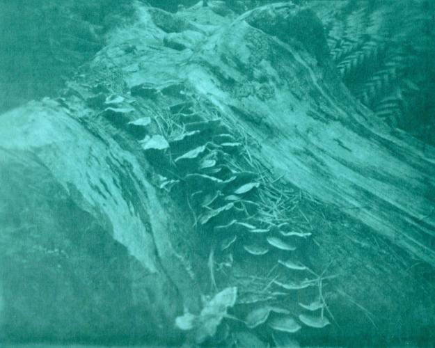 lumen 3.jpg