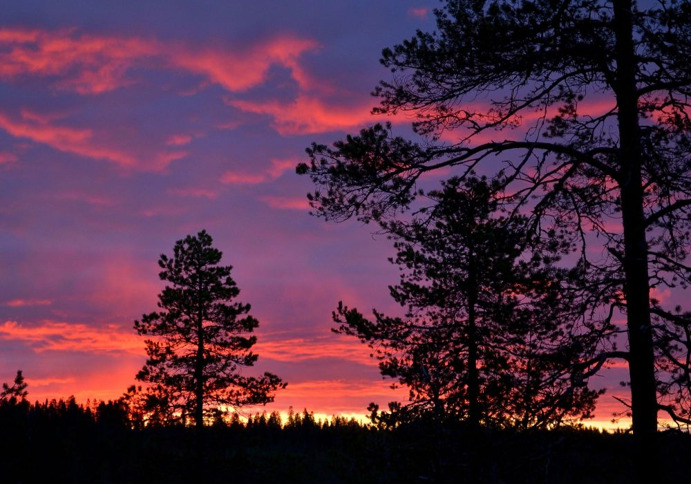 Auringonlasku tarjosi mahtavia värejä, mutten mäntymetsältä löytänyt millään hyvää kuvauspaikkaa.