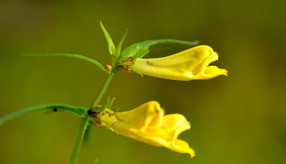 keltainen.jpg