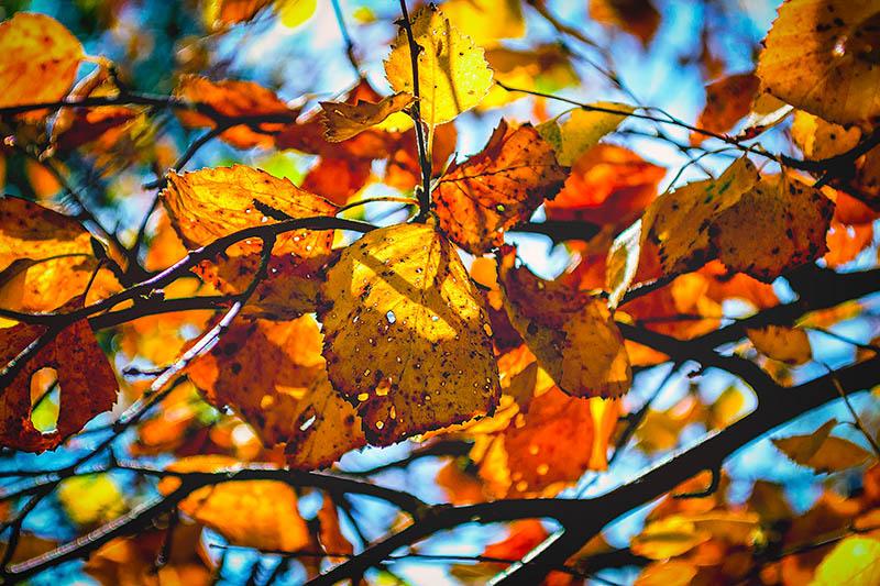Lähtiessä oli vielä kevät, nyt lehdet jo kellastuvat.
